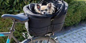 Er din hund også dit et og alt?